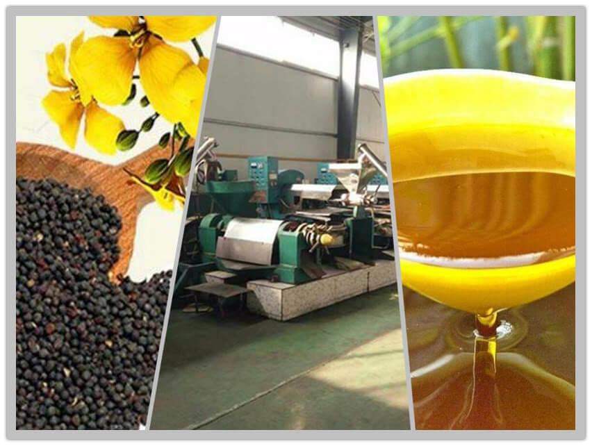 canola oil production line