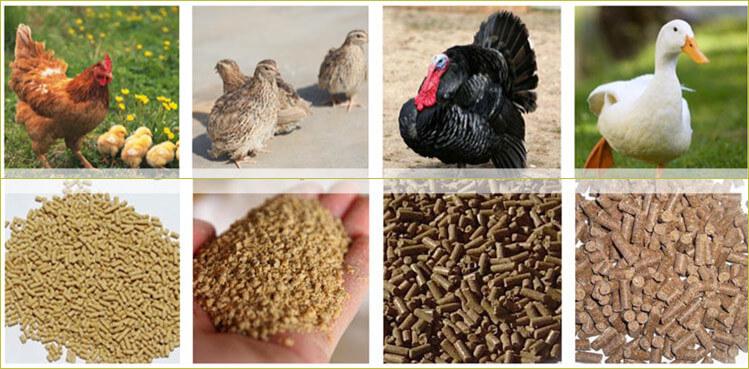 oil cake pellet for poultry feed