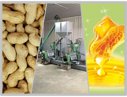 20T/D Peanut Oil Plant