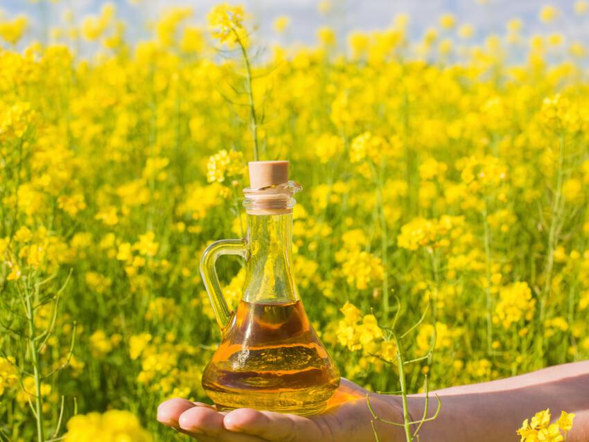 rapeseed oil, canola oil